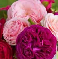 Сочетание цветов в букетах