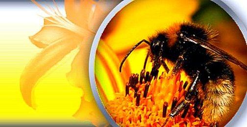 Пчелы в ваших снах